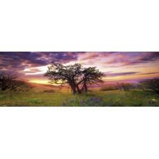 Puzzel Oak Tree,Hum.2000 Pan.Heye 29472