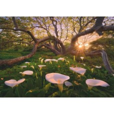 Puzzle Calla Clearing 1000 pc.Heye 29906